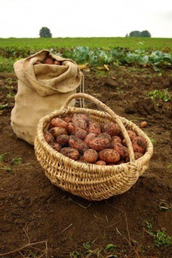Život na farmě :-) - Obrázek č. 34