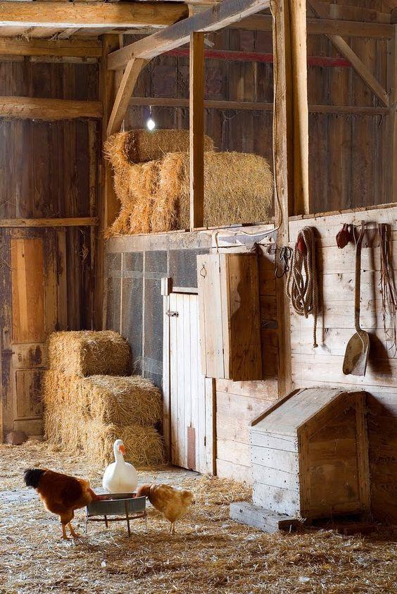 Život na farmě :-) - Obrázek č. 36