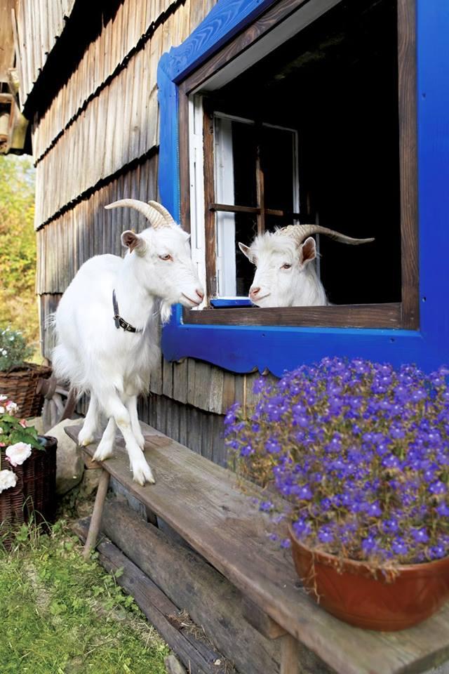 Život na farmě :-) - Obrázek č. 59