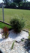 úzka tráva vpredu kavyľ perovitý