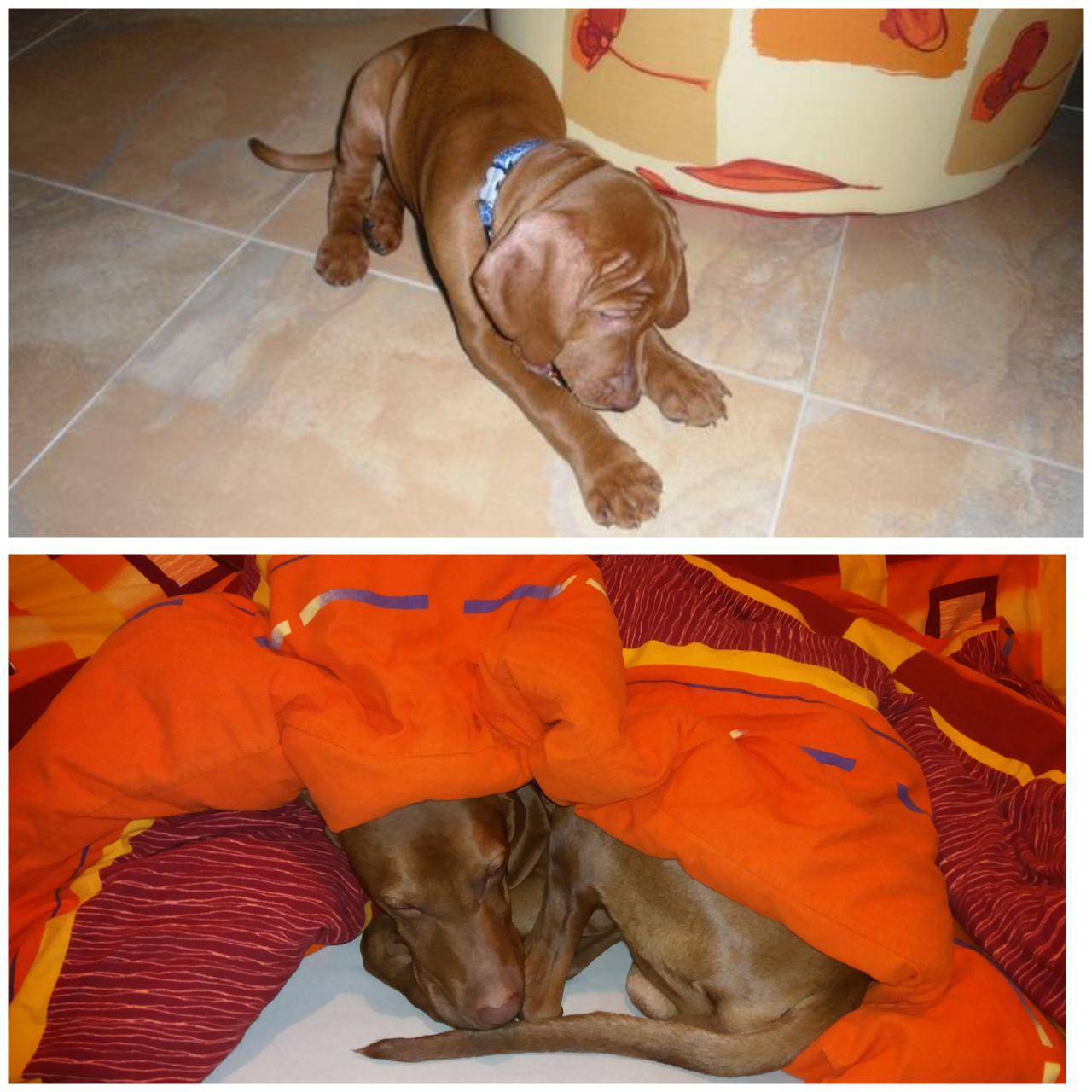 Rok 2017 u nás a po našem.... - Je to presne 5let,co jsme si domu prinesli nase psi miminko...☺