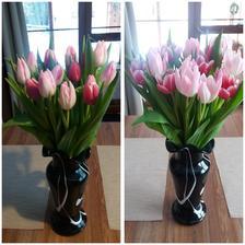 Puvodne takrka bile tulipany se krasne zabarvuji do ruzova...