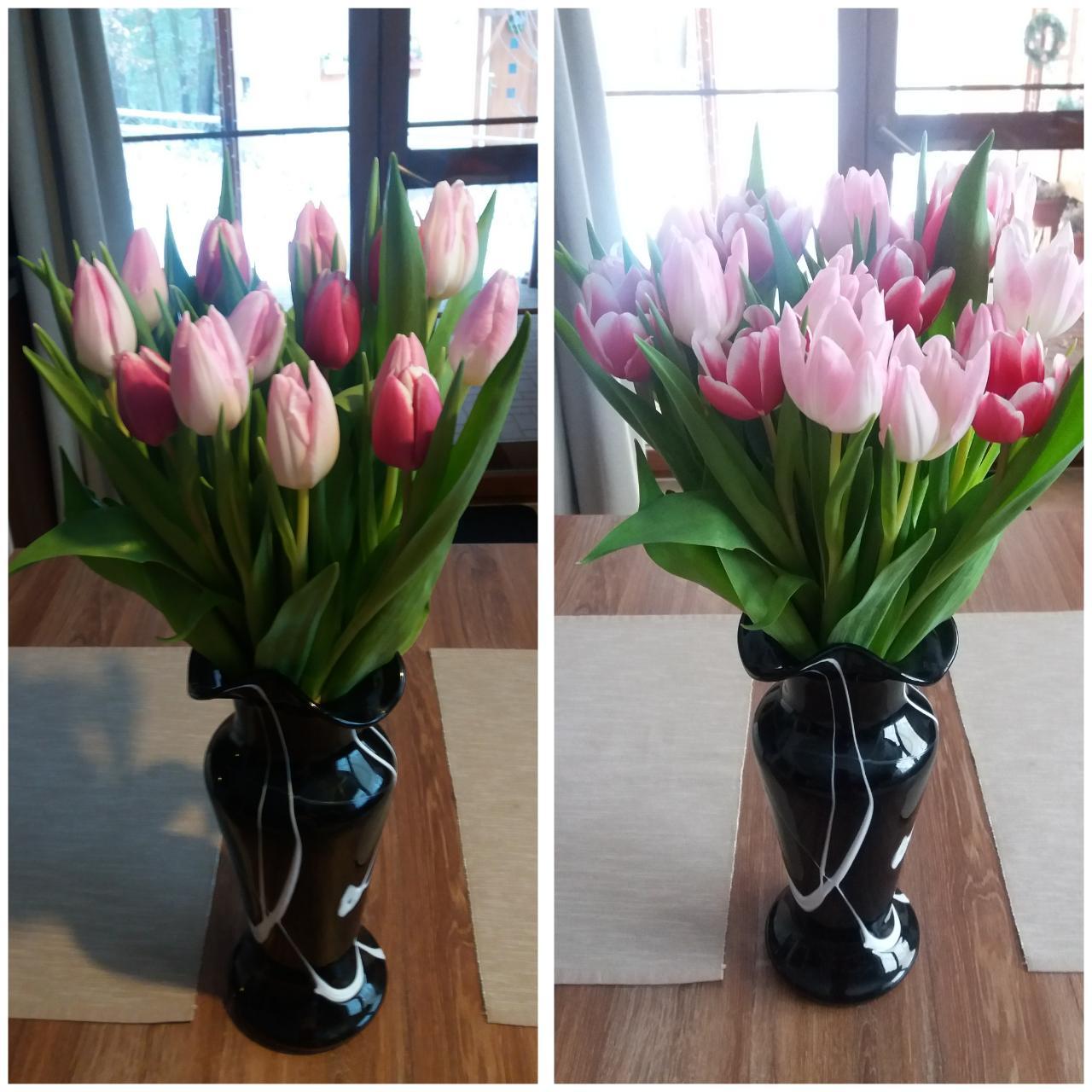 Rok 2017 u nás a po našem.... - Puvodne takrka bile tulipany se krasne zabarvuji do ruzova...