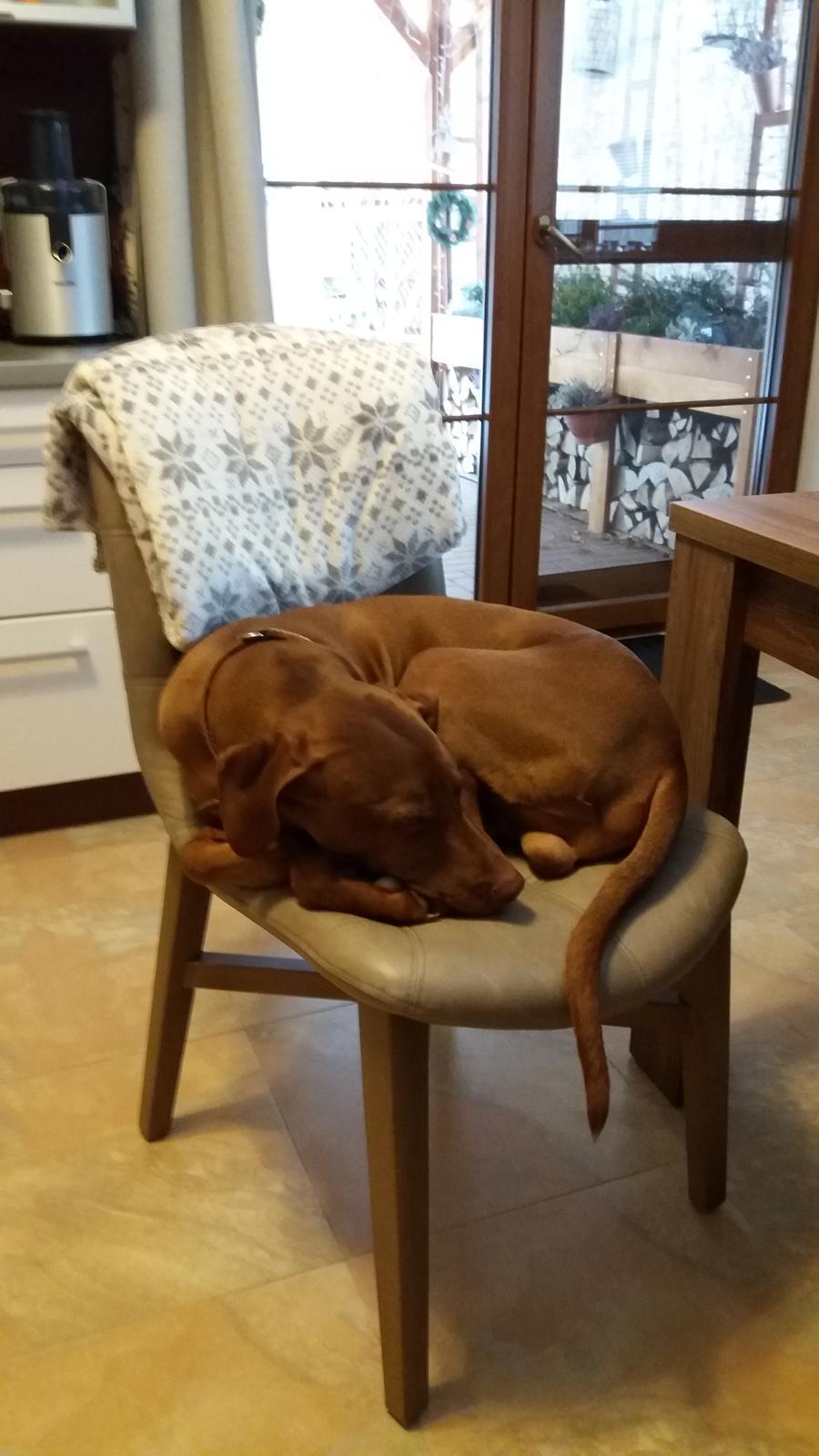 Rok 2017 u nás a po našem.... - Kožené židle si oblíbila celá rodina...