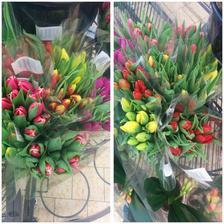 Syn mi na nákupu vyfotil dnešní nabídku tulipánů,jedny hezčí než druhý...objednala jsem si růžový,ty jsem ještě neměla..