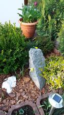 Na podzim jsem zasadila 30 narcisek,tak pokvetou cele ctyri..