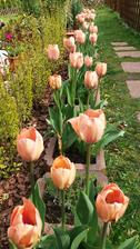 "Moje ""ruzove""tulipany..."