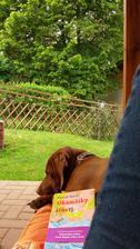 Vystizny nazev i pro dnesni odpoledne..doma nikdo,tak si ten klid s rezavcem uzivame na terase na lehatku😊