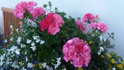 Na skok doma,vše krrásně kvete..😊