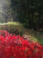 Bedel je plno na zahradě..