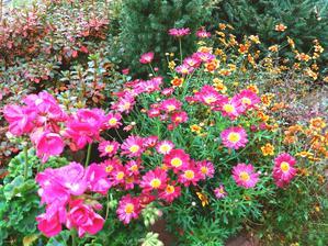 Stále kvetou a mrazíky nejsou,tak je nechám ještě do konce měsíce.
