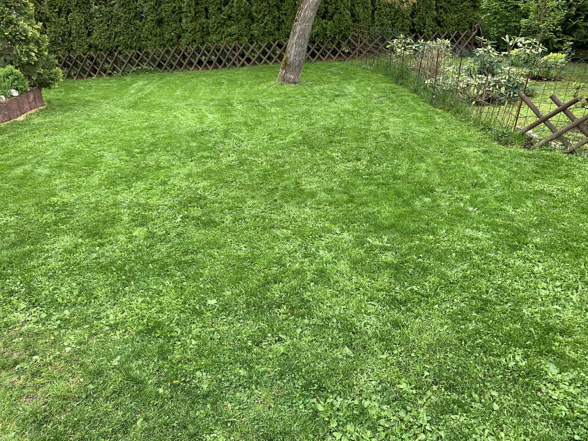 Chápu,že pro většinu lidí  je to běžný,ale pro nás skoro zázrak...my máme za celé ty roky místy na zahradě první zelenou hmotu na zemi,co nazývám vznešeně trávou😉 😍konecně místa,kam se dá sednout,položit deka,chodit po tom,si příjdu jak v ráji😆..věnovala jsem tomu přesně měsíc času,ale stálo to ta to a příští rok si to určitě zopáknu... - 21.5.