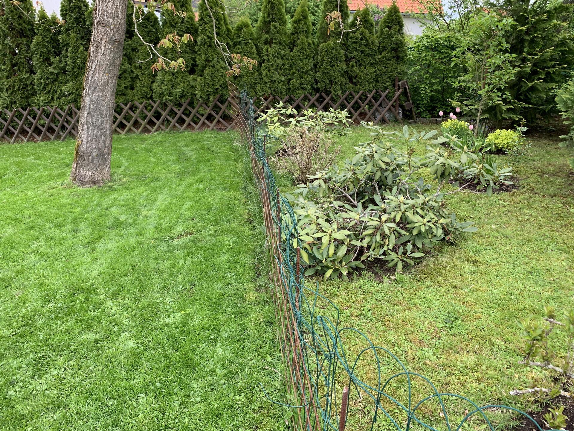 Chápu,že pro většinu lidí  je to běžný,ale pro nás skoro zázrak...my máme za celé ty roky místy na zahradě první zelenou hmotu na zemi,co nazývám vznešeně trávou😉 😍konecně místa,kam se dá sednout,položit deka,chodit po tom,si příjdu jak v ráji😆..věnovala jsem tomu přesně měsíc času,ale stálo to ta to a příští rok si to určitě zopáknu... - Rozdíl mezi částí s péčí a bez...