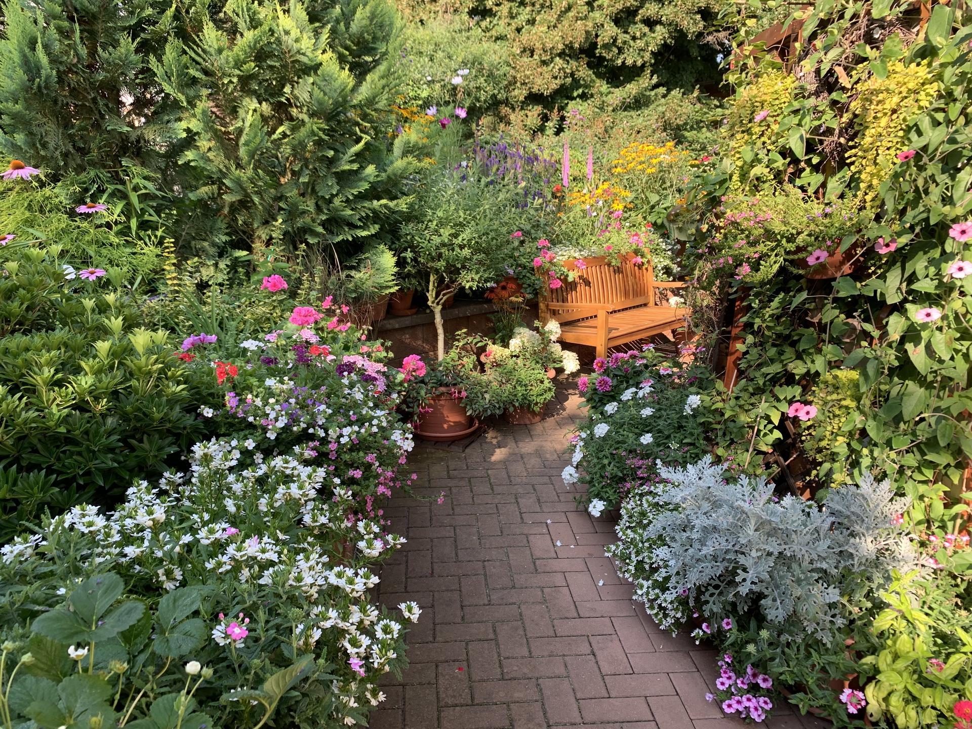 Naše ranní botanická… - Obrázek č. 1