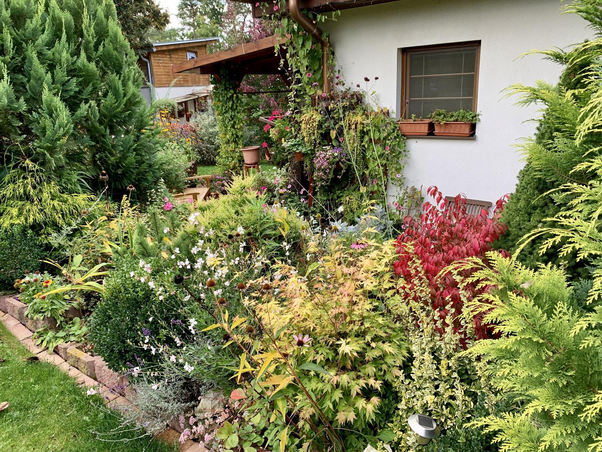 Rána už jsou mrazivá,ale přes den bylo o víkendu krásně a slunečno,tak jsme se vrhli s pomocníkem čtyřnohým na pár těch podzimních truhlíků,složili jsme další dřevo a ostříhali valnou část předzahrádky a zahrady před zimou…většina letniček stále kvete a zahrada se barví i do podzimních barev…všem hezký podzim😊 - Obrázek č. 1