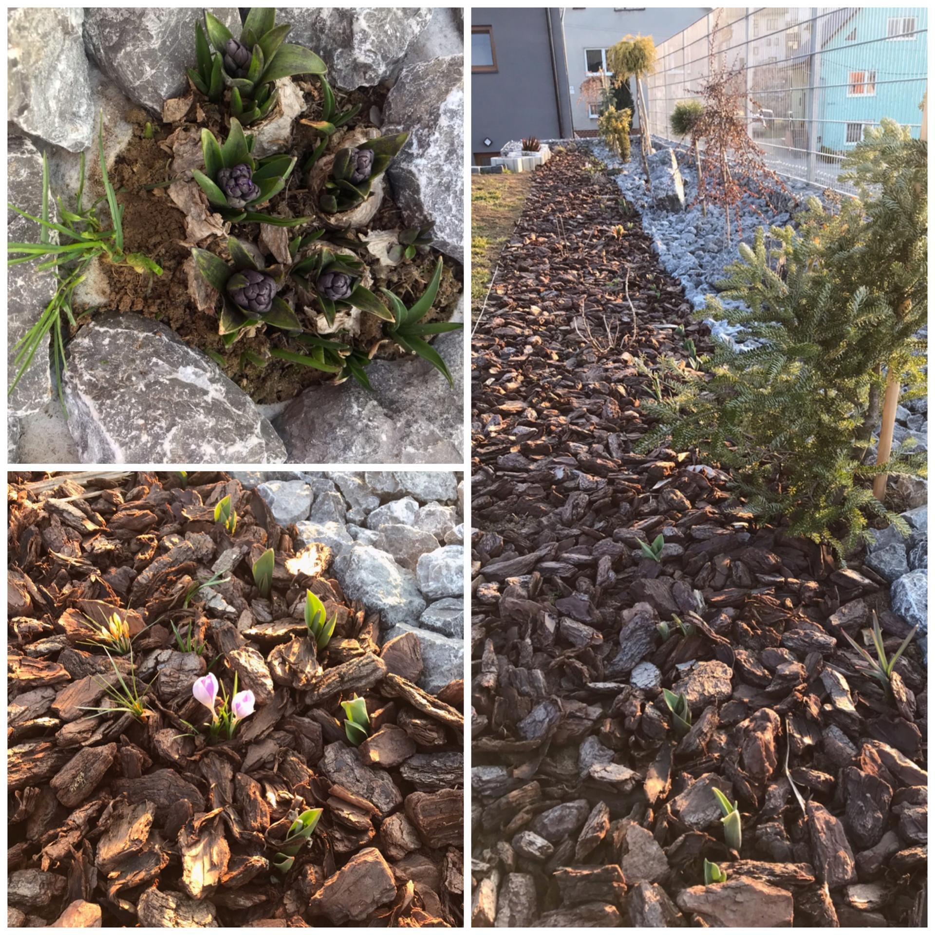 Začiatok 3. roku bývania vo vytúženom domčeku - Exteriér, jarné kvety začínajú konečne vykukovať🌷😉ale puky hortenzie zamrzli, tak neviem či niečo z nej bude😩