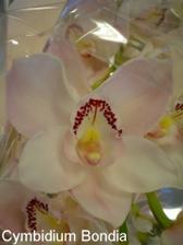 každopádne kytica z orchideí