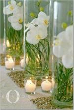 orchids idea