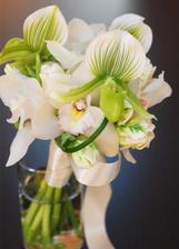 krasne moje favorit orchidee