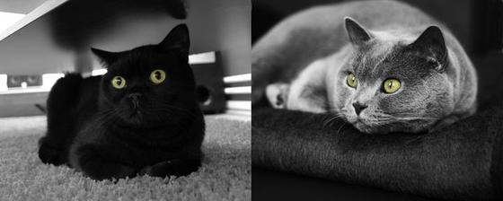 Naše družičky kocurovia Kasper a Oliver :)