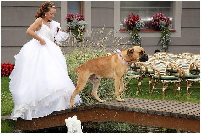 Pre štvornohých svadobčanov i deti - Obrázok č. 20