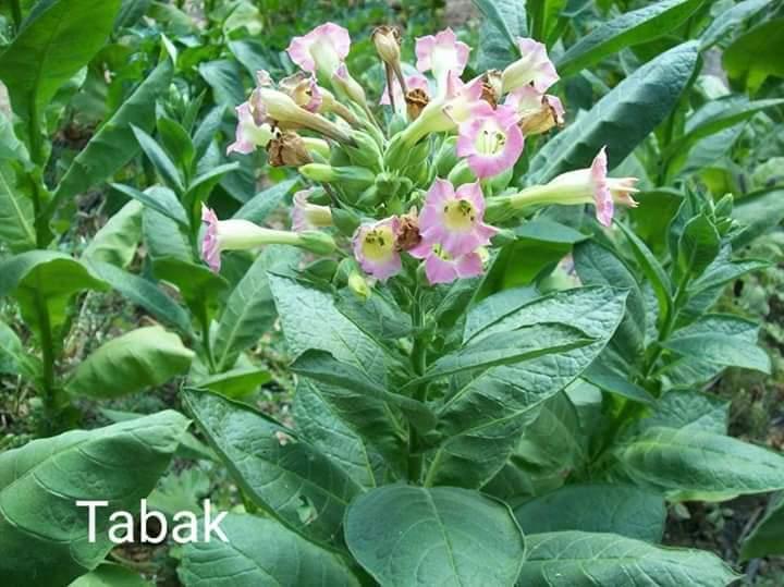 Semená kvetov a zeleniny. - Obrázok č. 1
