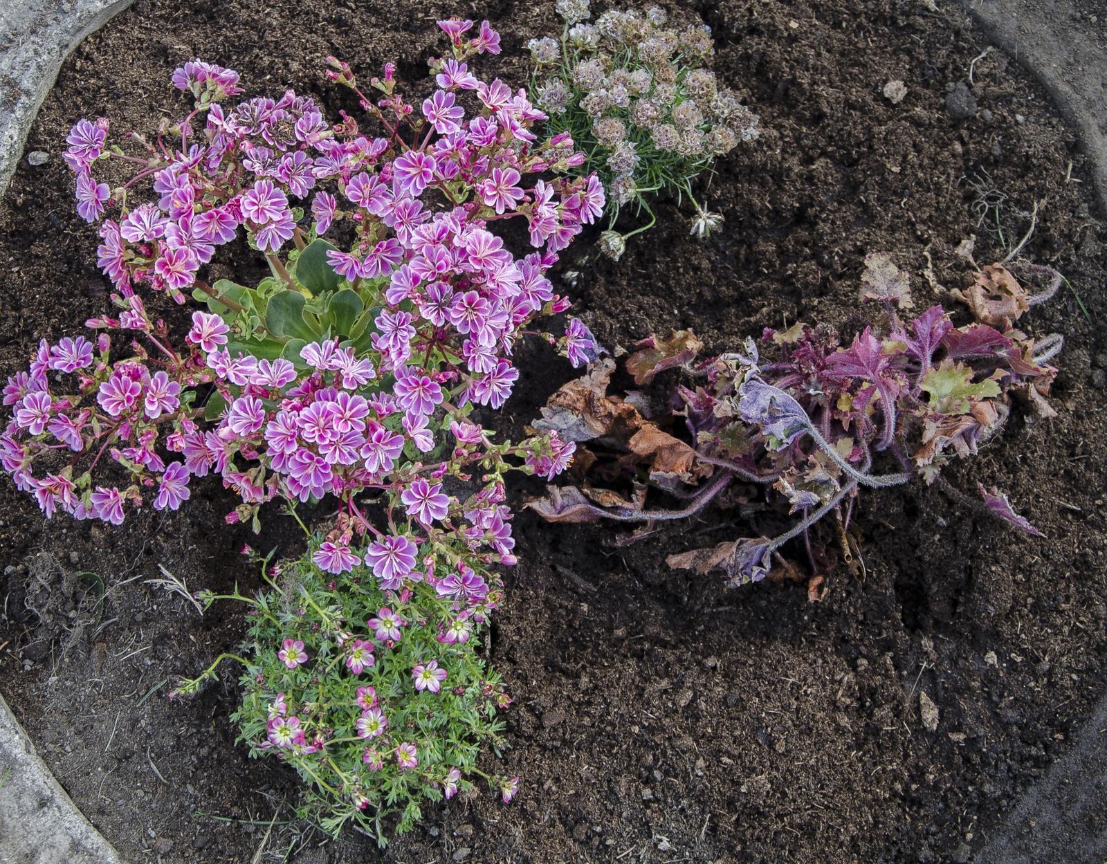 Květiny, stromy, keře - Obrázek č. 1