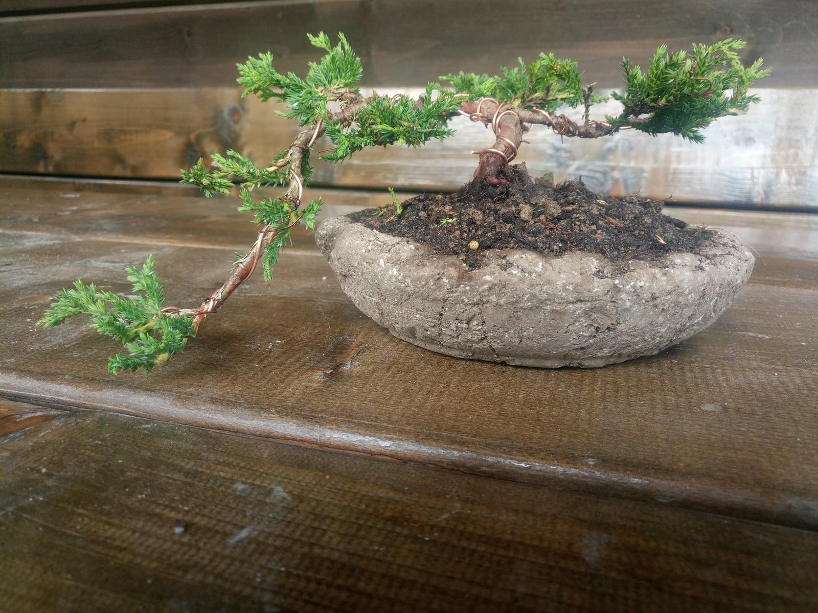 miska s bonsajom - Obrázok č. 2