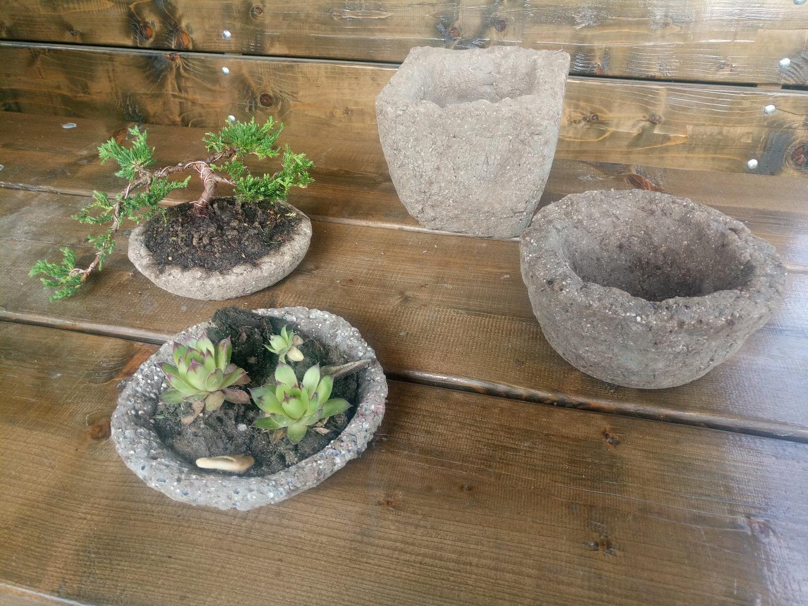 miska s bonsajom - Obrázok č. 3