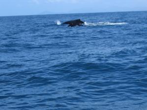 páření velryb
