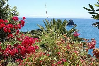 Madeira,doporučujeme jako svatební cestu,je tam opravdu nádherně,už naše fotečky