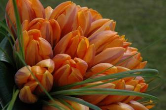 moje kyti v detailu-tulipány