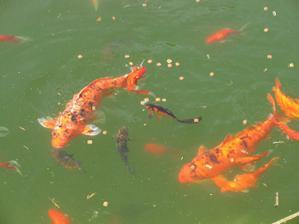 nase rybky