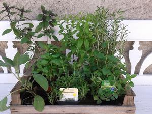 ...nové bylinky do špirály - bazalka, šalvia, saturejka, oregano, rozmarín a verbena citrónová...má úžasnú vôňu