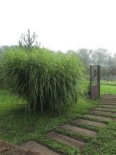 ...zatiaľ nedokončený chodník do záhrady