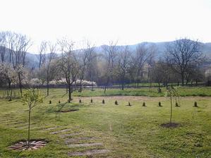 ...nové zmeny v našej záhrade - zrútili sme starý plot a vysadením tují sme predelili dvor od ovocného sadu