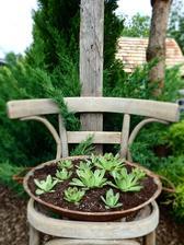 ...aj stará vyhodená stolička si našla u nás v záhrade svoje miesto :-)