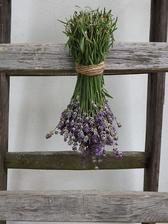 ...zber úrody, sa teším ako prevonia celý dom...milujem vôňu levandule :-)