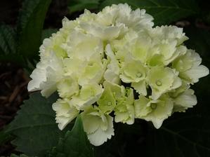...po roku prvé kvety