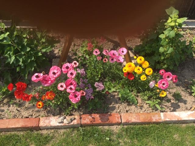 Záhrada, môj  relax - Obrázok č. 1