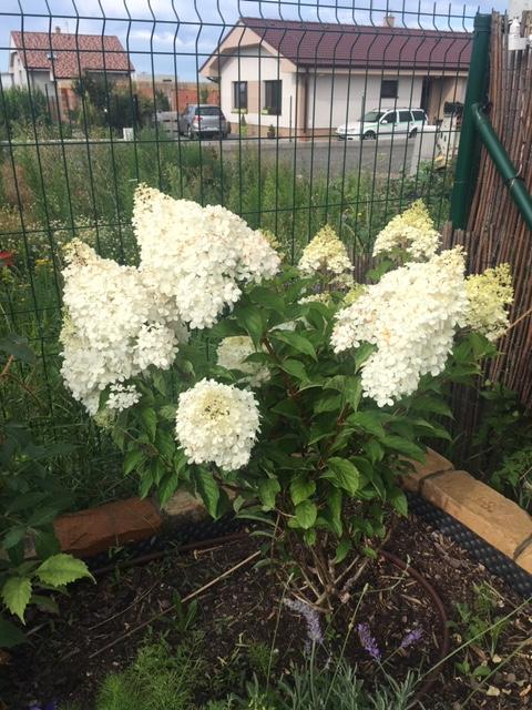 Záhrada, môj  relax - Obrázok č. 2