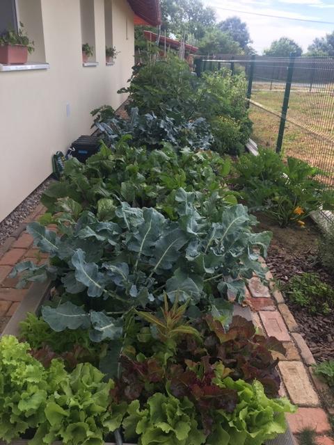 Záhrada, môj  relax - Obrázok č. 8