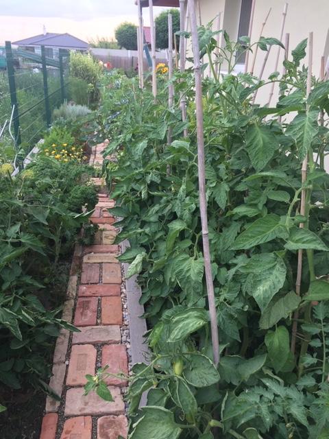 Záhrada, môj  relax - Obrázok č. 9