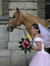 Koně a koně..