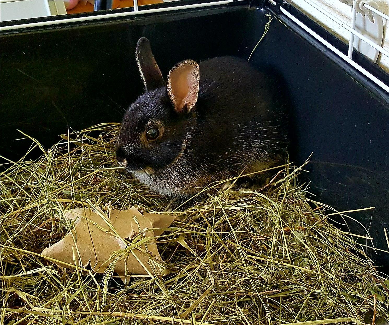 26.6.2020_naše králičí 🐇 slečna.. první minuty doma - Obrázek č. 1