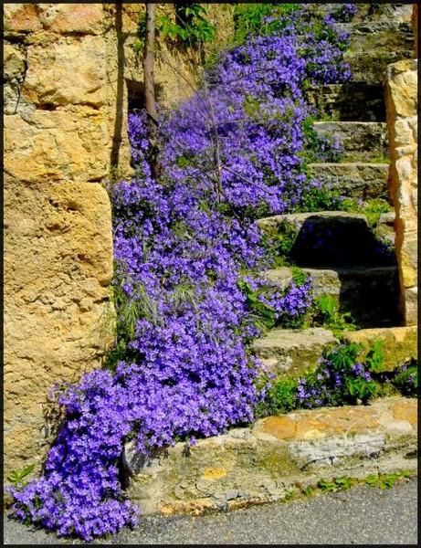 Záhrady - Obrázok č. 30