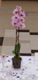 vyzdoba uprostred stolu