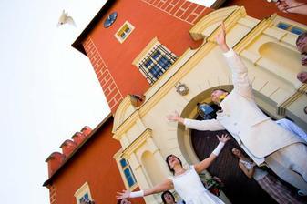 Profi - holoubkům se moc letět nechtělo