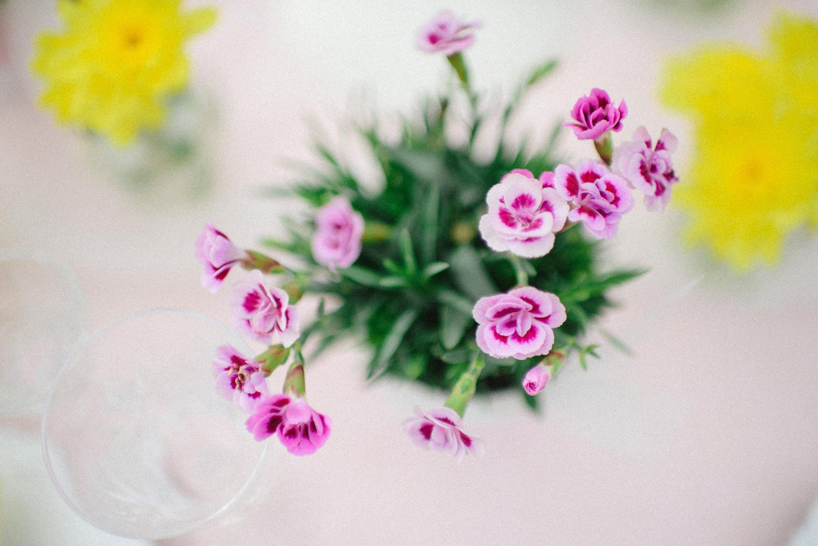 Jarné rande foto - moja srdcová záležitosť a hobby :) - Obrázok č. 14