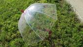 Sada deštníků pro svatební hosty,
